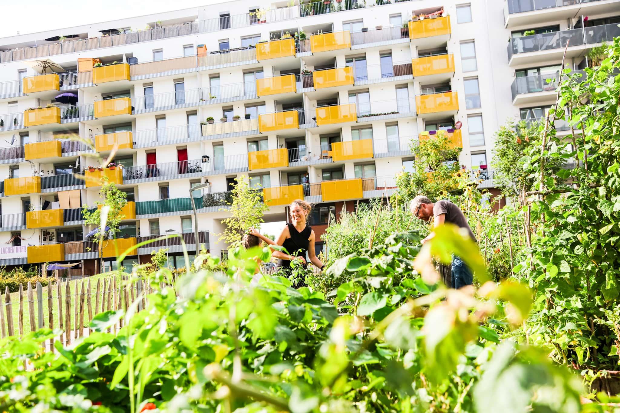 Menschen ernten ihr Gemüse bei einem Gemeinschaftsgarten im Bednerpark.